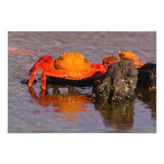 Parque nacional de Equador, Ilhas Galápagos, Impressão Fotográficas