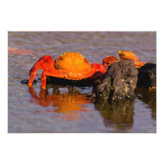 Parque nacional de Equador, Ilhas Galápagos, Impressão De Foto