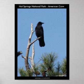 Parque nacional de Hot Springs, AR - corvo america Poster