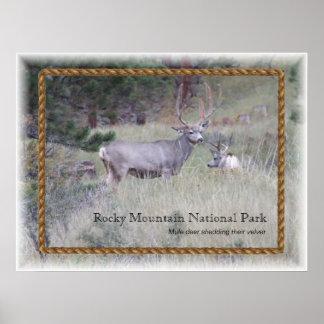 Parque nacional de montanha rochosa poster