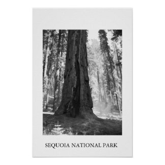 Parque nacional de sequóia poster
