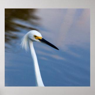 Parque nacional dos EUA, Florida, marismas Poster