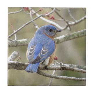 Parte traseira do Bluebird