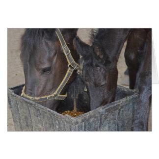 Partilha dos cavalos cartão comemorativo