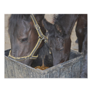 Partilha dos cavalos convite 10.79 x 13.97cm
