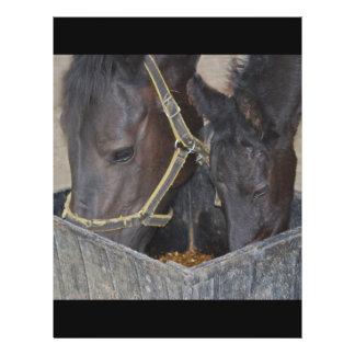 Partilha dos cavalos modelo de panfletos