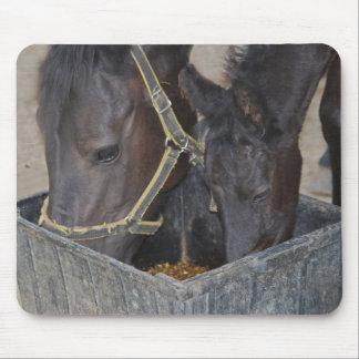 Partilha dos cavalos mousepads