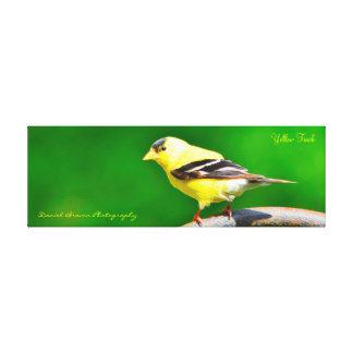 passarinho do amarelo da foto das canvas 36x12x1.5