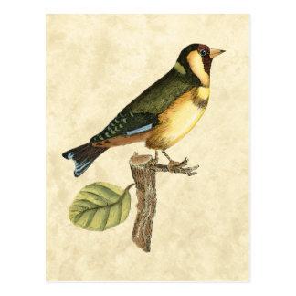 Pássaro amarelo e verde empoleirado em um ramo cartão postal