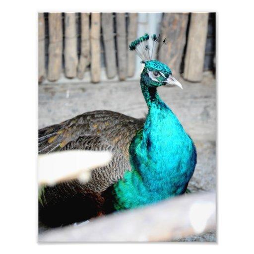 Pássaro azul arte de fotos