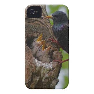 pássaro capas para iPhone 4 Case-Mate