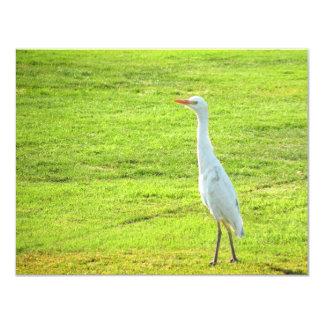 Pássaro Convite 10.79 X 13.97cm