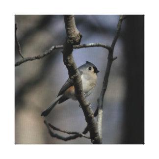 Pássaro, cópia das canvas