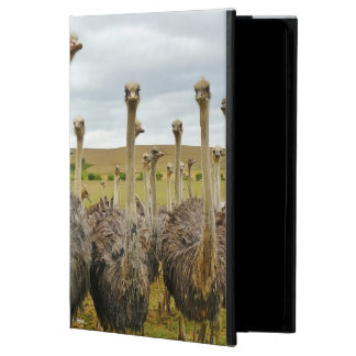 Pássaro da avestruz