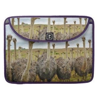 Pássaro da avestruz bolsa MacBook pro