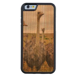 Pássaro da avestruz capa cherry bumper para iPhone 6