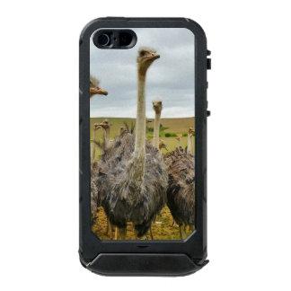 Pássaro da avestruz capa incipio ATLAS ID™ para iPhone 5