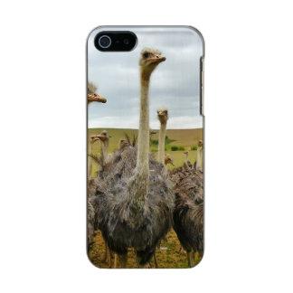 Pássaro da avestruz capa incipio feather® shine para iPhone 5