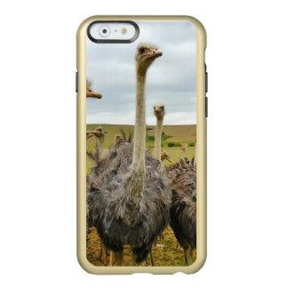 Pássaro da avestruz capa incipio feather® shine para iPhone 6