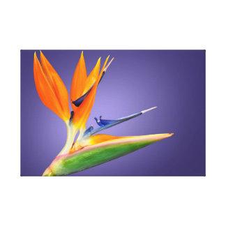 Pássaro da flor de paraíso (reginae do Strelitzia) Impressão Em Tela