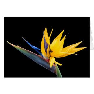 Pássaro da flor do paraíso e do cartão tropicais