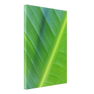 Pássaro da foto da folha do paraíso impressão de canvas envolvidas