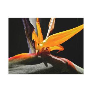 Pássaro da fotografia esticada das canvas do paraí impressão em canvas
