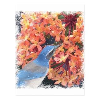 Pássaro da neve cartão postal