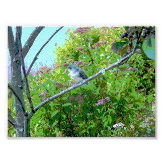 Pássaro de bebê adornado do principiante do impressão de foto