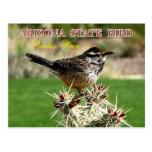 Pássaro de estado da arizona - carriça de cacto cartão postal