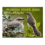 Pássaro de estado de Florida - tordo dos remedos Cartão Postal