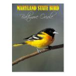Pássaro de estado de Maryland - Baltimore Oriole Cartoes Postais