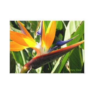 Pássaro de paraíso impressão de canvas envolvidas