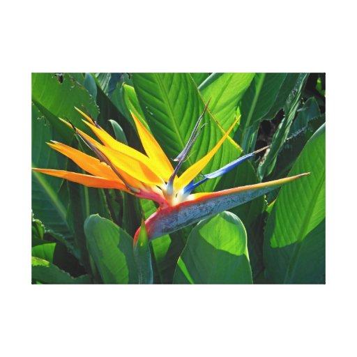 Pássaro de paraíso impressão de canvas esticada