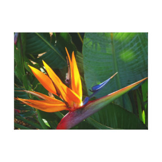 Pássaro de paraíso impressão em tela canvas