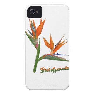 Pássaro de paraíso capas para iPhone 4 Case-Mate
