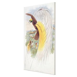 Pássaro de paraíso, 'dos pássaros de New Guinea Impressão Em Tela