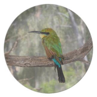 Pássaro do abelha-comedor do arco-íris, Austrália Prato De Festa
