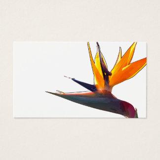 Pássaro do cartão de visita do paraíso