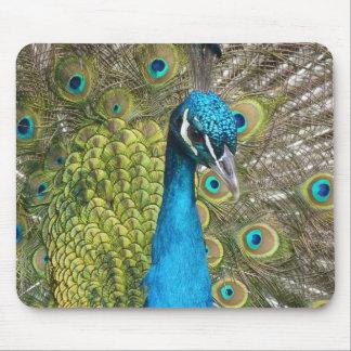 Pássaro do pavão com penas bonitas mouse pad