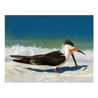 Pássaro do Skimmer no cartão da praia