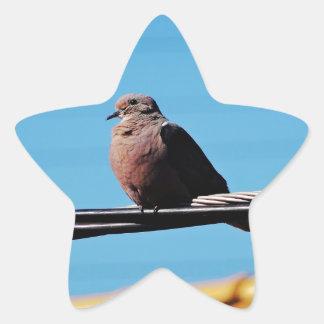 Pássaro em Brasil Adesito Estrela