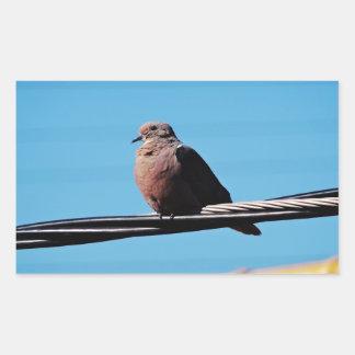 Pássaro em Brasil Adesivo Retangular