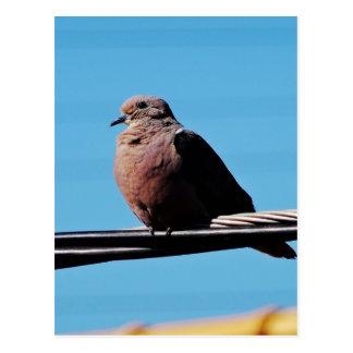 Pássaro em Brasil Cartão Postal