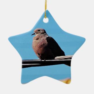 Pássaro em Brasil Ornamento De Cerâmica Estrela