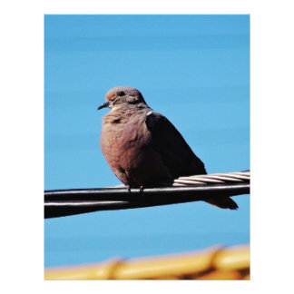 Pássaro em Brasil Papel Timbrado