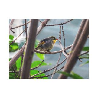 Pássaro em um impressão das canvas da árvore