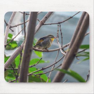 Pássaro em um mousepad da árvore
