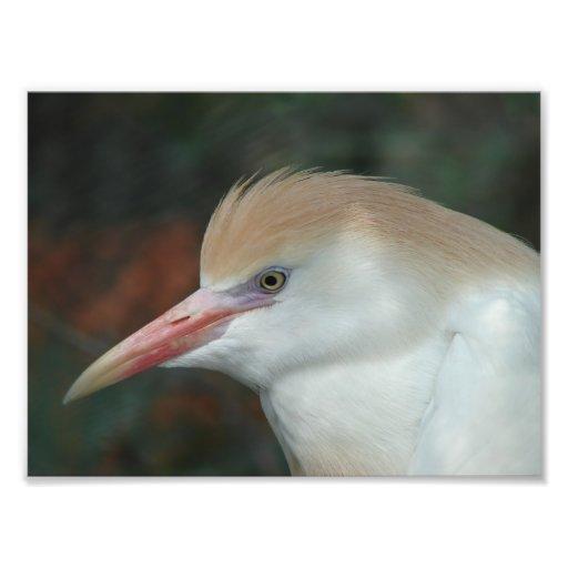 Pássaro exótico bonito impressão de fotos