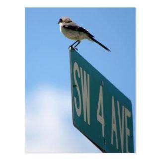Pássaro na 4o avenida. cartão